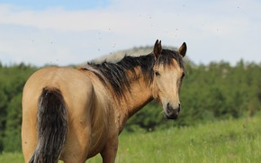 Picture background, horse, horse