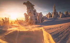 Picture winter, the sun, snow, trees, landscape, nature, ate, slope, drifting snow
