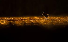 Picture bird, bird, Lukasz Sokol