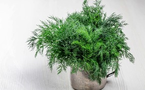 Picture greens, dill, mug