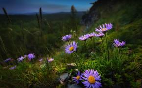Picture grass, flowers, nature, slope, Paul Sahaidak