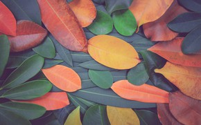 Picture autumn, leaves, background, colorful, texture, background, autumn, leaves