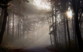 Picture road, autumn, forest, the sun, rays, light, trees, branches, fog, Park, trunks, morning, haze, pine