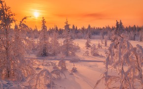 Picture winter, frost, road, forest, the sky, the sun, snow, landscape, sunset, branches, nature, dawn, in …