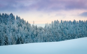 Picture winter, frost, forest, the sky, clouds, snow, nature, ate, slope, frost, the snow, snowy