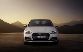 Picture Audi, TDI, Sportback, Audi S5, 2019
