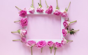 Picture flowers, background, roses, frame, buds, pink, flowers, roses, frame