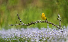 Picture summer, flowers, bird, glade, branch, spring, yellow, bokeh, bird, a woodland songster