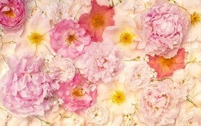 Picture flowers, background, roses, petals, eustoma