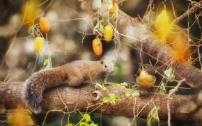 Picture branches, berries, tree, bird, treatment, protein, fruit, a couple, Duo, friends, bokeh, Flycatcher