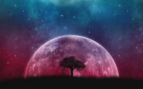 Picture Fantasy, Tree, Planet, Stars sky