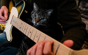 Picture cat, cat, look, face, music, the dark background, grey, the game, guitar, hands, guitarist, male, …