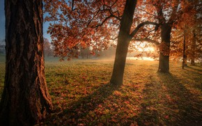 Picture autumn, the sun, trees, Park, foliage, Andrei