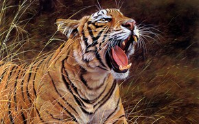Picture language, grass, look, face, nature, tiger, figure, picture, art, mouth, fangs, lies, painting, roar, Alan …