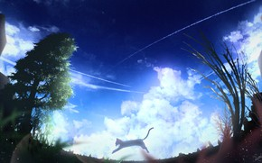 Picture cat, summer, the sky, clouds, nature, jump