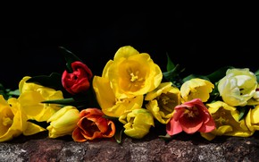Picture flowers, red, bouquet, spring, tulips, nature, flora