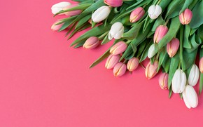 Picture flowers, bouquet, tulips, pink, white, white, pink background, fresh, pink, flowers, beautiful, romantic, tulips, spring