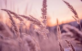 Picture grass, sunset, Russia, Ekaterinburg, warm