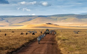 Picture road, field, machine, landscape, mountains, nature, pasture, Savannah, Africa, Safari, Zebra, wildebeest