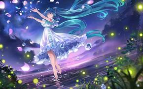 Picture grass, water, joy, mood, grass, long hair, long hair, rose petals, water, mood, joy, starry …