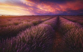 Picture field, the sky, clouds, landscape, sunset, flowers, nature, perspective, France, dal, the evening, horizon, space, …