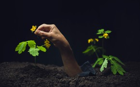 Picture flowers, earth, hand