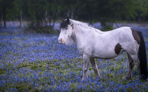 Picture flowers, horse, horse