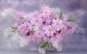 Picture flowers, Sakura, cherry