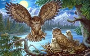 Picture animals, owl, bird