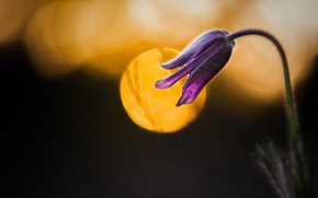 Picture flower, light, nature, the dark background, lilac, round, spring, Bud, silhouette, bokeh, cross