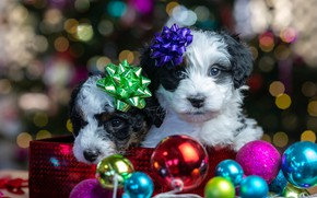 Picture balls, glare, puppies, Christmas, New year, kids, a couple, Duo, faces, doggie, Бернедудель