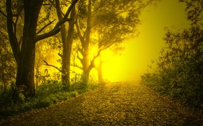 Picture road, trees, fog, pavers