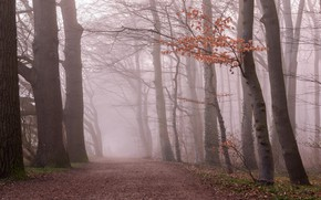 Picture autumn, forest, branches, fog, foliage, morning