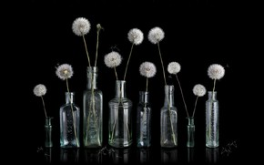 Picture background, banks, dandelions