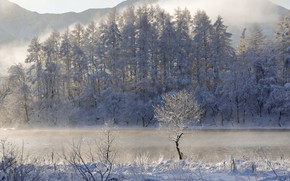 Picture winter, forest, snow, trees, lake, Japan