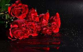 Picture drops, roses, bouquet, black background, red roses