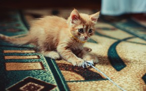 Picture cat, look, pose, kitty, room, pattern, carpet, the game, baby, red, muzzle, kitty, plays, paper, ...