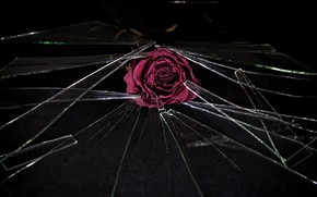 Picture flower, glass, fragments, rose