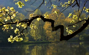Picture autumn, leaves, nature, lake, tree, branch, oak