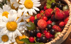 Picture flowers, berries, chamomile