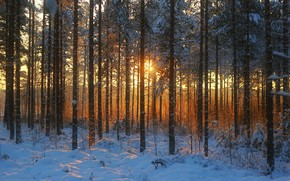 Picture winter, forest, photo