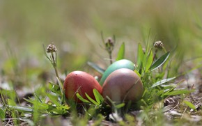 Picture background, eggs, Easter, weed