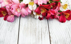 Picture flowers, Lily, pink, wood, pink, flowers, lily