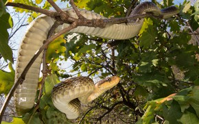 Picture leaves, branches, snake