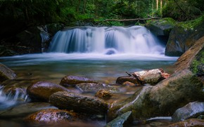 Picture log, waterfall, trees, shore, boulders, foliage, pond, forest, stream, summer, branches, stones