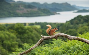 Picture mountains, nature, river, shore, view, branch, protein, snag