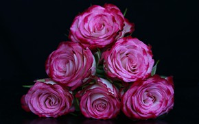 Picture flowers, roses, black background
