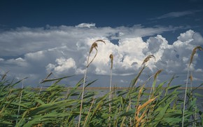 Picture the sky, clouds, lake, cane, the wind, Common reed