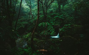Picture forest, trees, nature, stream, stones