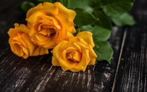 Picture drops, roses, trio, yellow roses